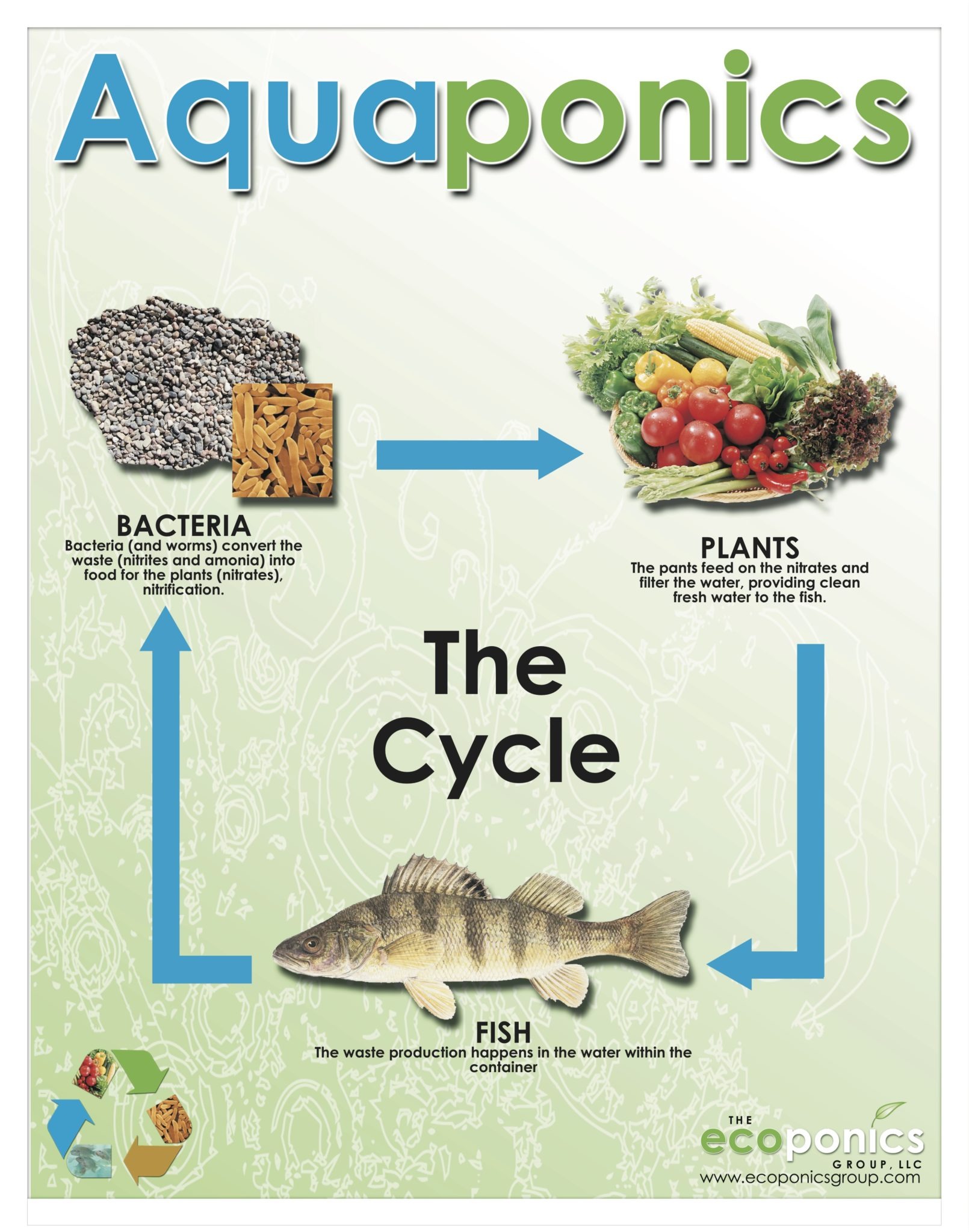 The Simplicity of Aquaponics